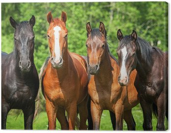 Canvas Print Group of young horses on the pasture