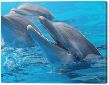 Canvas Print happy dolphins