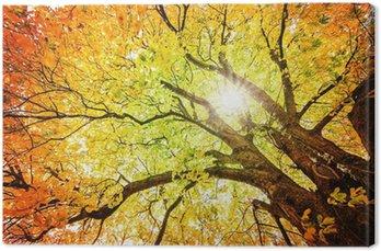 Canvas Print Herbst-Baum