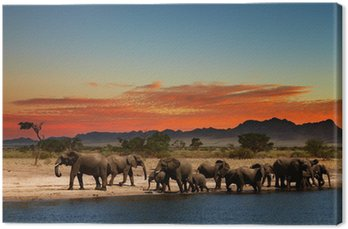Herd of elephants in african savanna