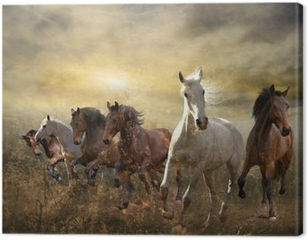 herd of horses galloping free at sunset