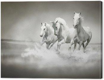 Canvas Print Herd of white horses running through water