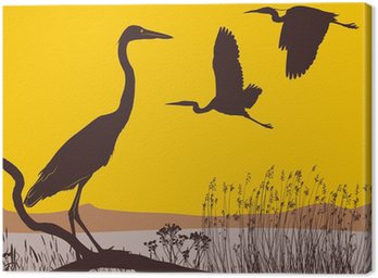Herons at sunrise Canvas Print