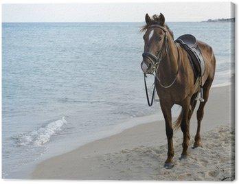 Canvas Print Horse on beach