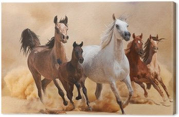 Canvas Print Horses in sand dust