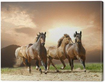 Canvas Print horses run