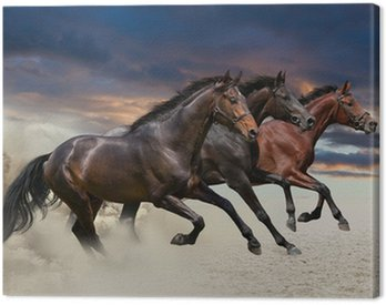 Canvas Print Horses running at a gallop along the sandy field