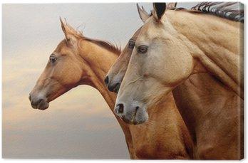 Canvas Print horses