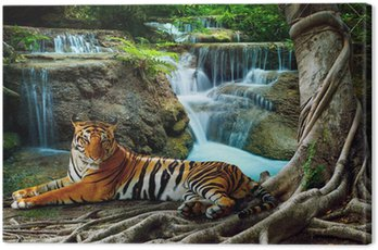 Canvas Print indochina tiger lying with relaxing under banyantree against bea