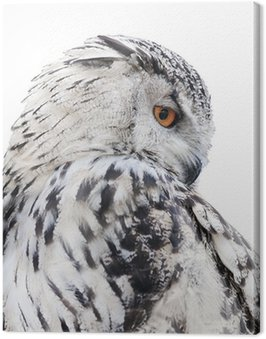 isolated black and white owl Canvas Print
