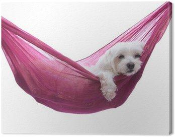 Canvas Print Just hanging around - puppy dog in hammock