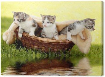 Katzenbabys im Körbchen mit Spiegelung Canvas Print