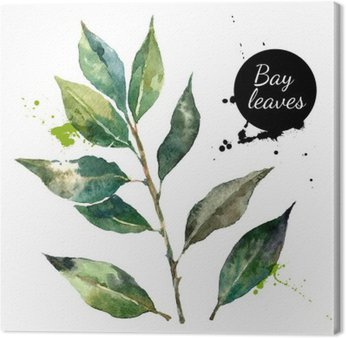 Canvas Print Kitchen herbs and spices banner. Vector illustration. Watercolor