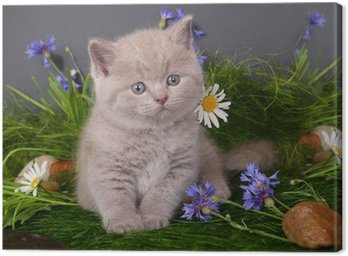 Kitten in flowers on a black background