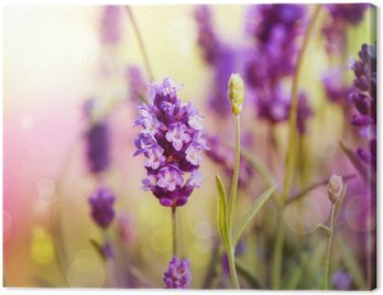 Canvas Print Lavender Field