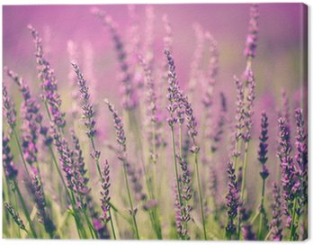 Canvas Print Lavender flower