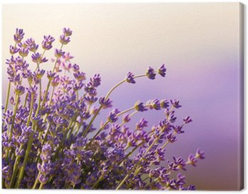 Canvas Print Lavender flowers bloom summer time