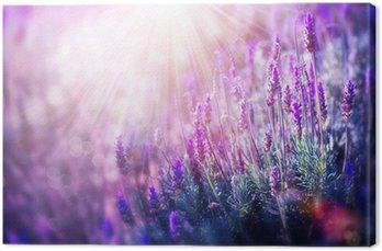 Lavender Flowers Field. Growing and Blooming Lavender
