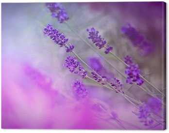Canvas Print Lavender in shade, made with purple color filter