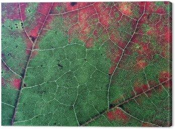 Leaves in Fall Season Color
