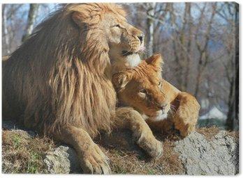 leone e leonessa Canvas Print