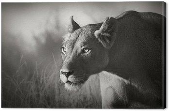 Lioness stalking Canvas Print