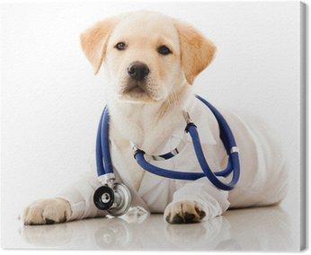 Little dog as a vet