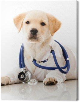 Canvas Print Little dog as a vet