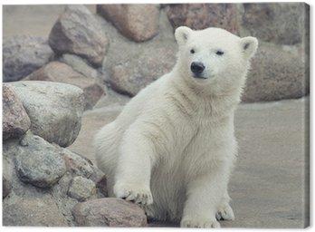 Canvas Print Little polar bear