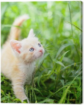 Canvas Print little red cat