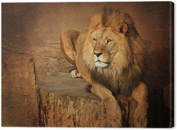 Löwe Canvas Print