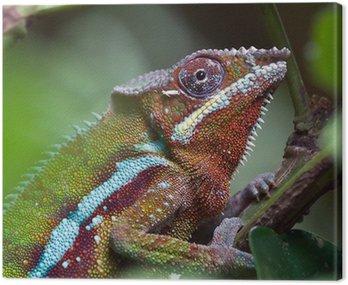 Madagascar Chameleon in Zurich Zoo (Switzerland) Canvas Print
