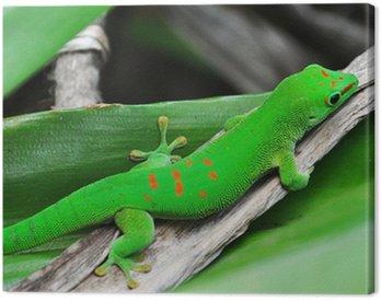 Madagascar day gecko Canvas Print