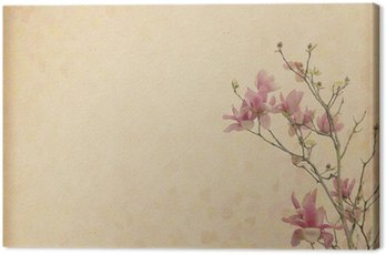 magnolia flower with Old antique vintage paper background Canvas Print