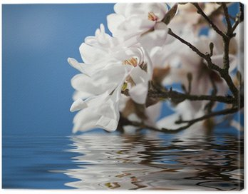 Magnolia flowers in the water Canvas Print