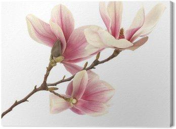 Canvas Print magnolia