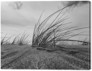 Marram Grass Close-up In Black And White