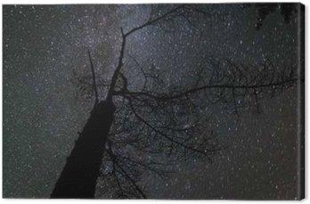 Milky way landscape