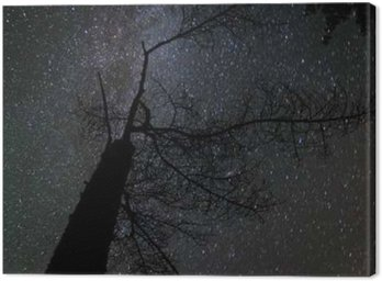 Canvas Print Milky way landscape