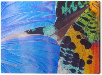 Canvas Print Multicolored butterflies wing