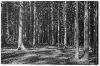 Canvas Print Nadelwald Monochrom