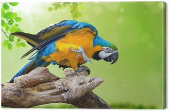 natural green background with Parrot Macaw Canvas Print