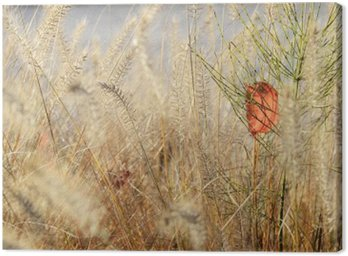 Nature plant background