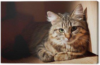 nice cat Canvas Print