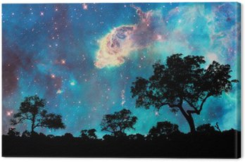 Canvas Print Night landscape with silhouette of trees and starry night