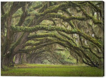 Oaks Avenue Charleston SC plantation Live Oak trees forest