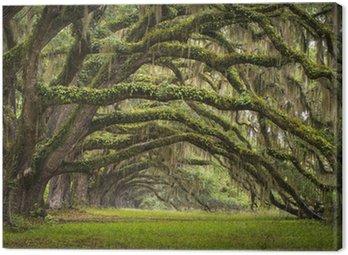 Canvas Print Oaks Avenue Charleston SC plantation Live Oak trees forest