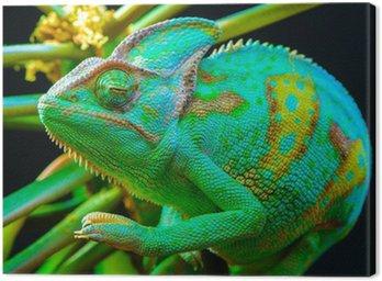 One Yemen chameleon Canvas Print