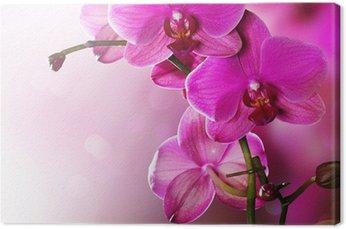 Orchid Flower border design Canvas Print