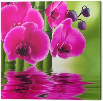 Canvas Print orchid flower with bamboo and reflection in water